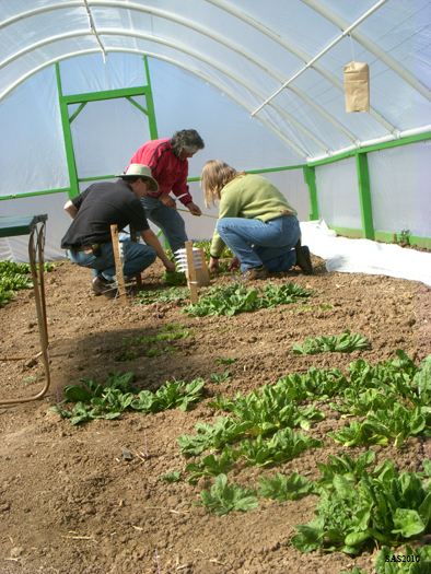 Image of ...Hoop House Project, (Left to Right) Dr. Mark Uchanski, Luz Hernandez, and Connie Falk