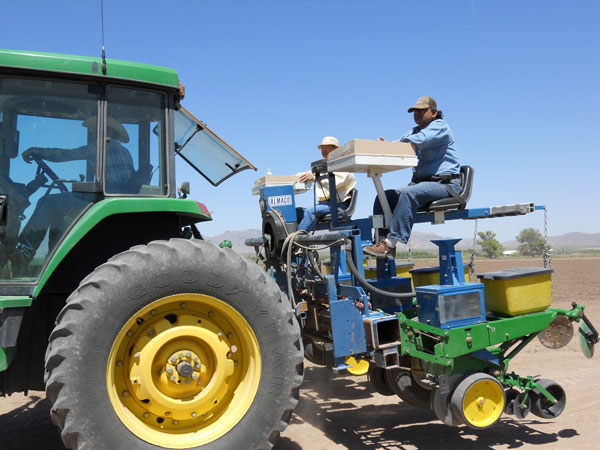 Image of ...Planting Cotton (Left to Right) Laurence Grooms, Jinfa Zhang, Sanjay Bajaj